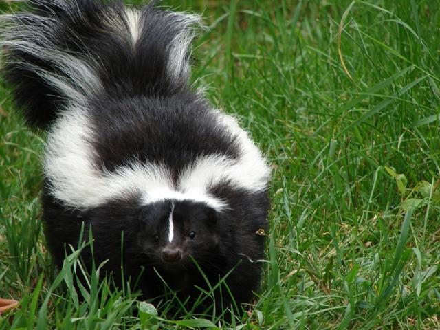 skunk shed foundation blocks